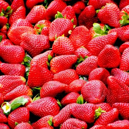Capsuni Asia - Arbusti fructiferi - AgroDenmar.ro