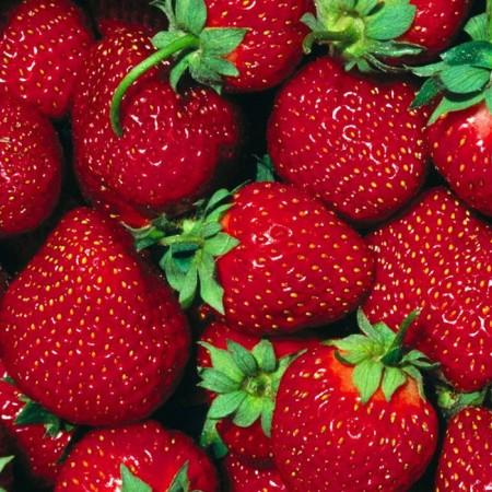 Capsuni Cabrillo - Arbusti fructiferi - AgroDenmar.ro