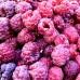 Zmeur violet Glen Coe - Arbusti fructiferi - AgroDenmar.ro