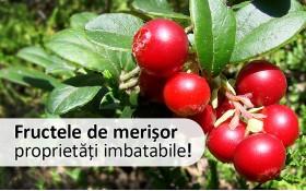 Fructele de merisor, proprietati terapeutice imbatabile