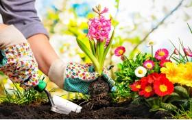 Sfaturi pentru plantarea bulbilor de flori