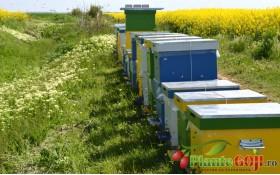 Galerie Foto Video - Apicultura, produse apicole