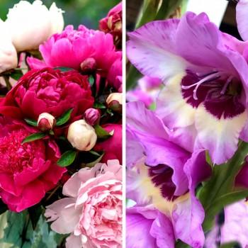 <span>Bulbi</span> <span>de</span> <span>Flori</span> <span>Promoție</span> <span>de</span> <span>Primăvară</span>