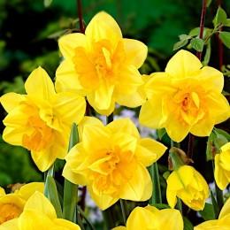 Narcise Apotheose
