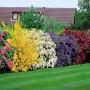 Arbusti ornamentali