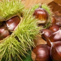 Pomi fructiferi Castan comestibil pret avantajos - Cumpara online