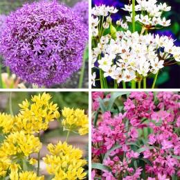 Bulbi de flori Ceapa Decorativa pret avantajos - Cumpara online