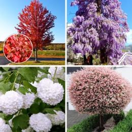Plante ornamentale pret avantajos - Cumpara online