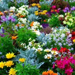 Plante ornamentale Plante perene pret avantajos - Cumpara online