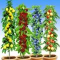 Pomi fructiferi Pomi columnari pret avantajos - Cumpara online