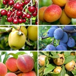 Pomi fructiferi pret avantajos - Cumpara online