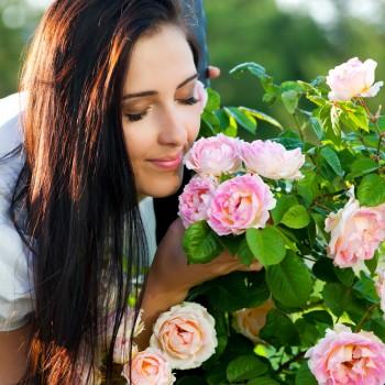 <span>Trandafiri</span> <span>Super</span> <span>Reducere</span> <span>până</span> <span>la</span> <span>26%</span>
