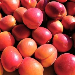 Cais Orange Rubista - Pomi fructiferi - AgroDenmar.ro