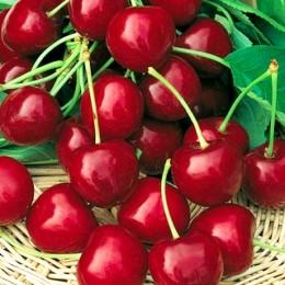 Cires Katalin - Pomi fructiferi - AgroDenmar.ro