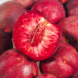Nectarin Sanguine d'Auvergne - Pomi fructiferi - AgroDenmar.ro