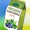 Ingrasamant pentru plante acidofile
