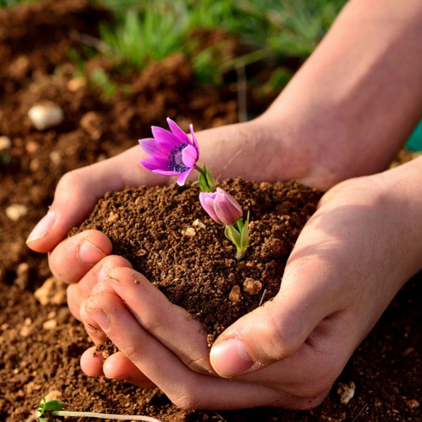Substrat pentru flori 5L - Accesorii gradina - AgroDenmar.ro