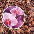 Substrat pentru orhidee 5L