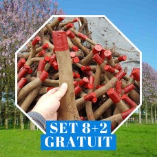 Paulownia Shantong 4 Butas - set 8+2 Gratuit