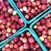 Afin Pink Lemonade - Arbusti fructiferi - AgroDenmar.ro