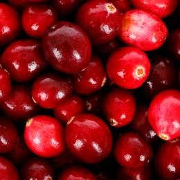 Afin Rosu - Merisor Ben Lear - Arbusti fructiferi - AgroDenmar.ro