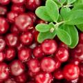 Afin Rosu - Merisor Cranberry