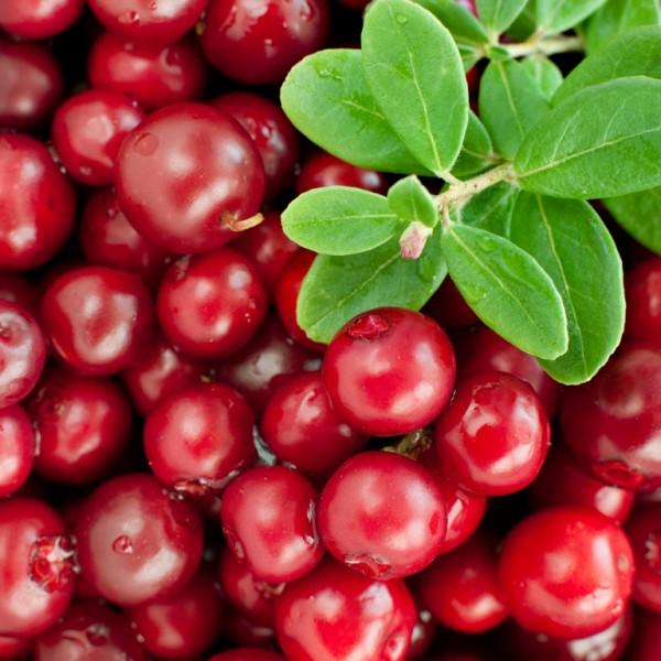 Arbusti fructiferi - Afin Rosu - Merisor Cranberry