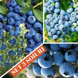 Afin - set 3 soiuri - Arbusti fructiferi - AgroDenmar.ro