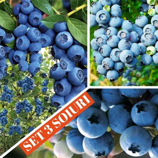 Arbusti fructiferi - Afin - set 3 soiuri