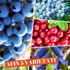 Afin - set 5 varietati
