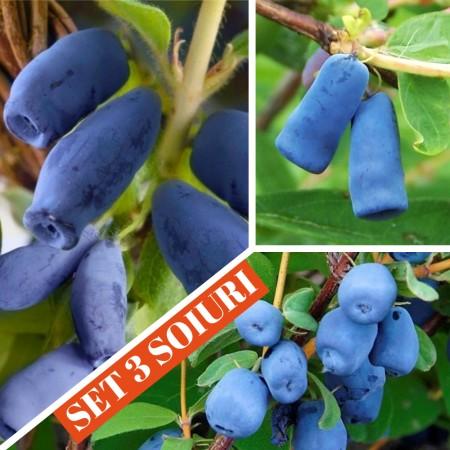 Afin siberian Lonicera - set 3 soiuri - Arbusti fructiferi - AgroDenmar.ro