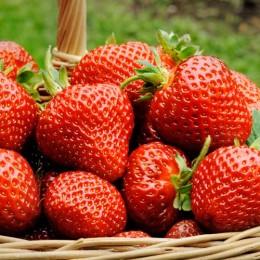 Capsuni Albion - Arbusti fructiferi - AgroDenmar.ro
