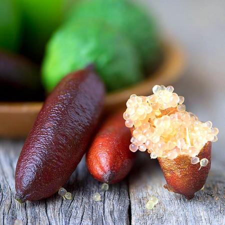 Lamai Caviar pe Rod - Citrus australasica - Arbusti fructiferi - AgroDenmar.ro