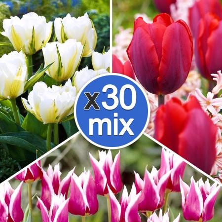 Lalele Mix Multicolor - Bulbi de flori - AgroDenmar.ro