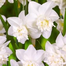 Narcise White Marvel