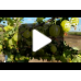 Arbusti fructiferi - Agris tulpina inalta altoit - set 3 soiuri