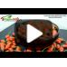Arbusti fructiferi - Goji Ningxia NQ1 - pe rod